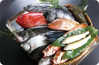 鮮魚の写真素材。